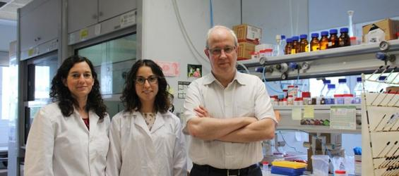 Un nuevo material permite el diagnóstico rápido de infecciones producidas por 'Candida albicans'