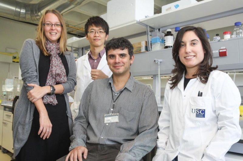 Investigadores españoles crean nanopartículas que penetran el tumor cerebral más letal para transportar fármacos en su interior