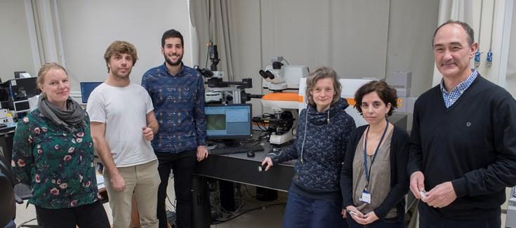 Andamios inteligentes para monitorizar el crecimiento de tumores en tiempo real y entornos controlados