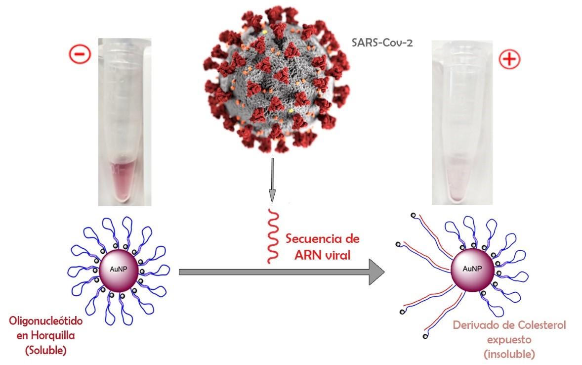 IMDEA Nanociencia desarrolla un innovador test diagnóstico del Coronavirus que será financiado por el Instituto de Salud Carlos III (ISCIII)