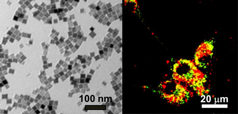 Nanocubos magnéticos para destruir células cancerosas