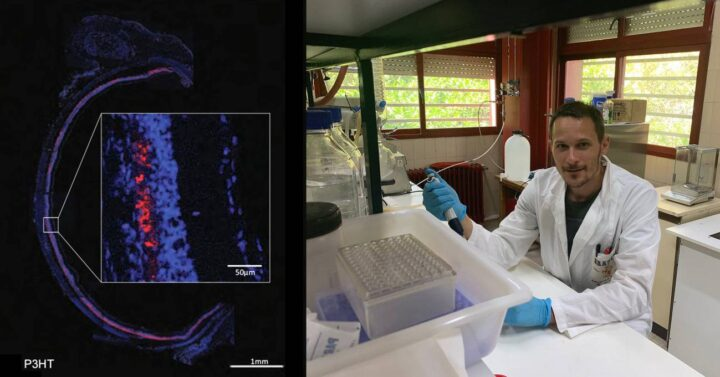 Ratas ciegas recuperan la vista durante ocho meses con la ayuda de nanopartículas