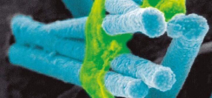 Hablando con las neuronas: electrodos neuronales nanoestructurados