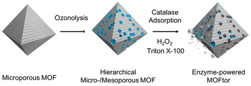 Investigadores desarrollan micromotores impulsados por enzimas basados en materiales organo-metálicos porosos