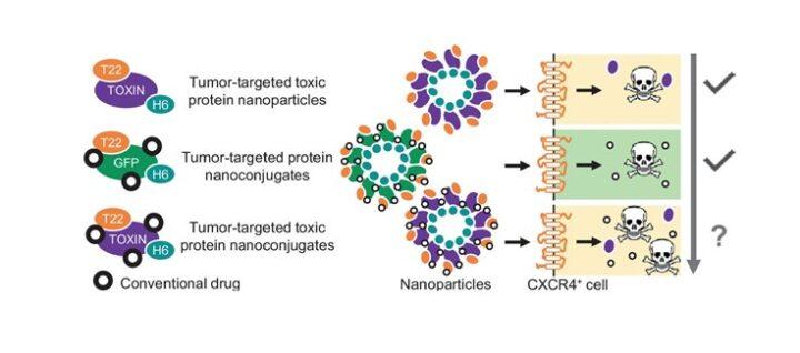Día Internacional del Cáncer: nanopartículas citotóxicas dirigidas a tumores
