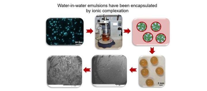 Estudian la encapsulación de gotas de emulsiones agua-en-agua como potenciales vehículos de administración de principios activos