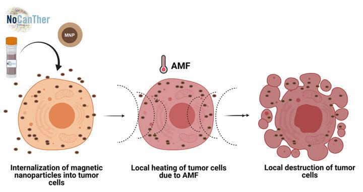 IMDEA Nanociencia coordina un proyecto europeo para el tratamiento del cáncer de páncreas avanzado